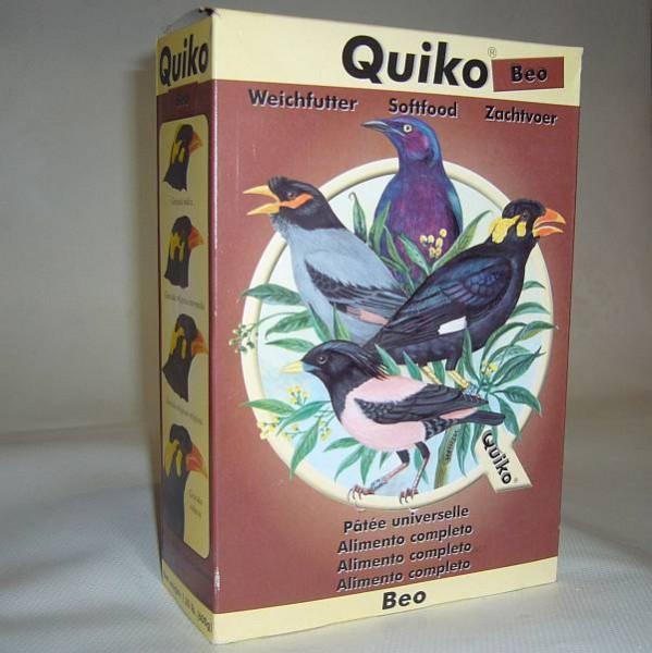 Quiko Beo