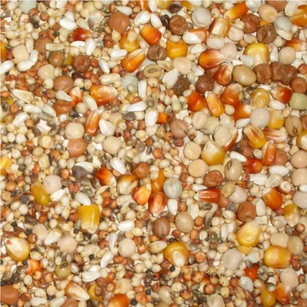 PALOMA 027 Premium Zucht ohne Weizen