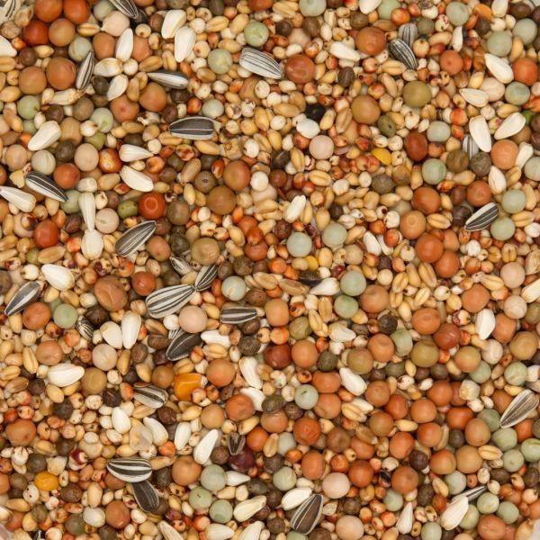 BEYERS Nr. 48 Zucht & Jungtaube ohne Mais
