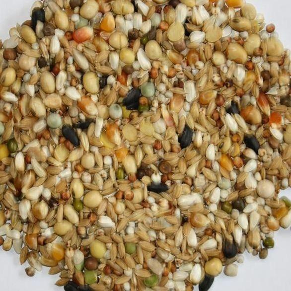 VERSELE-LAGA Traditional Premium Hirn 2